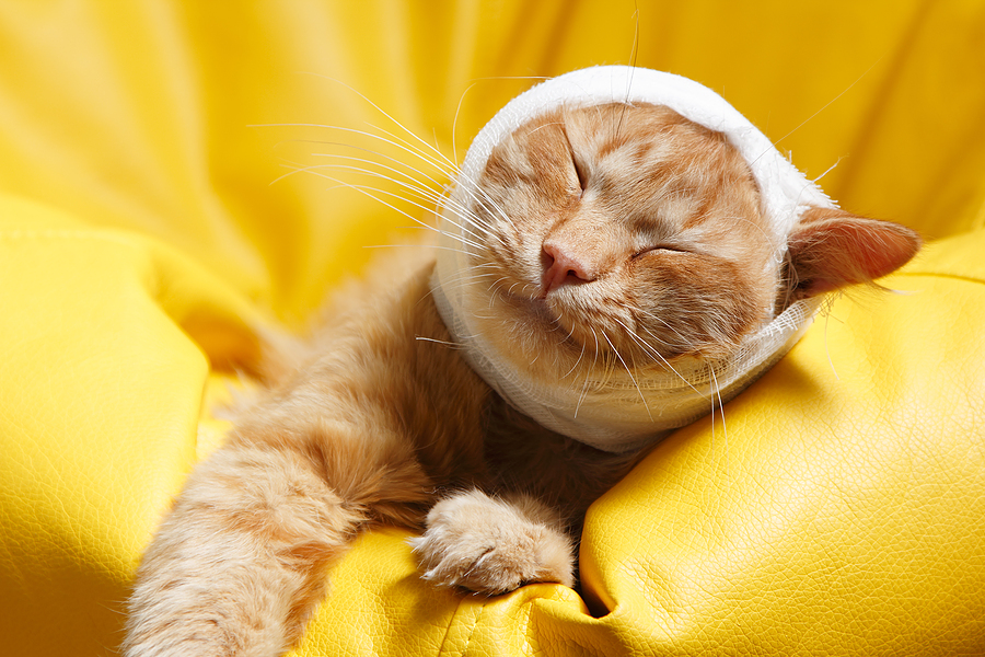 How To Make Bandages For A Cat